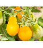 Tomate Yellow Plum 20 Sementes