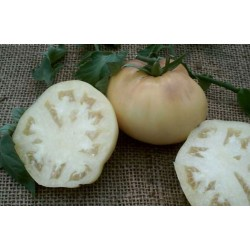 Tomate Great White Beefsteak - 20 Sementes