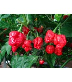 Pimenta Trinidad Scorpion - 10 Sementes